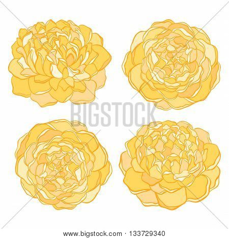 set of beautiful yellow flower isolated on white background. Hand-drawn contour lines and strokes.