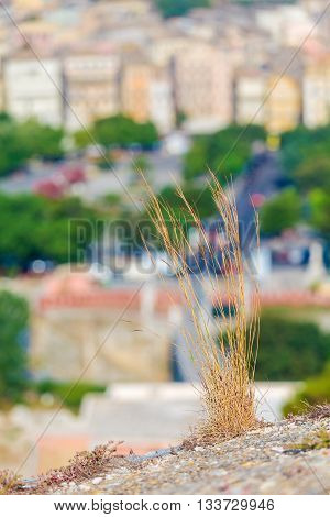 Dry Grass And Blurred Background With Aerial View Of Corfu City