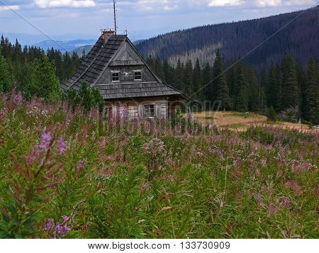 Mountain hut amidst a green field, with a forest in the background