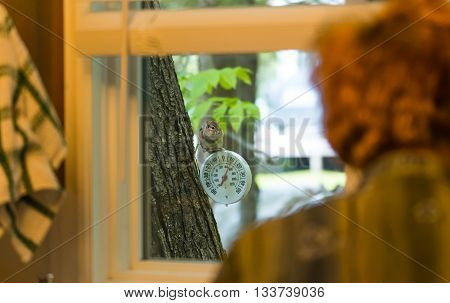 A curious chipmunk seems to ask while looking through a window,