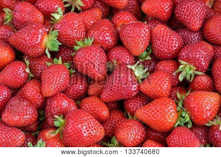 Fresh strawberry harvest, box of berries with stems