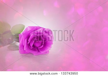 Single Violet Purple Rose In Soft Mood In Pastel Violet Purple Pink Bpkeh, Romantic Violet Purple Ro
