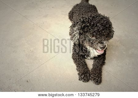 Black dog on cement background at the park.