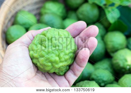 bergamot fruit on hand, good herb and aroma