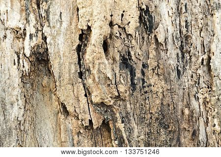 Old wood texture of tree bark tree bark with decay