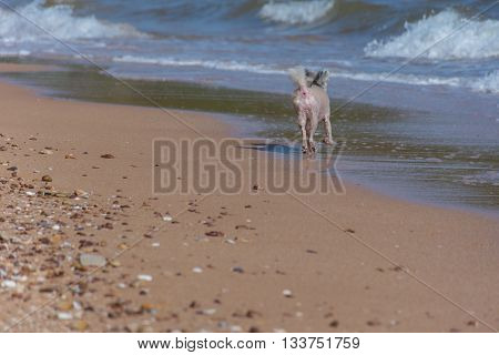 Dog So Cute Travel At Beach, Beige Color