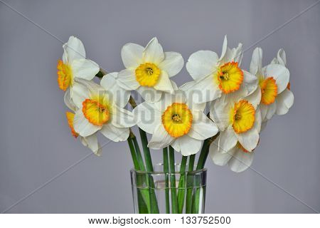 Narcissus Spring Flowers Bouquet White Yellow 1
