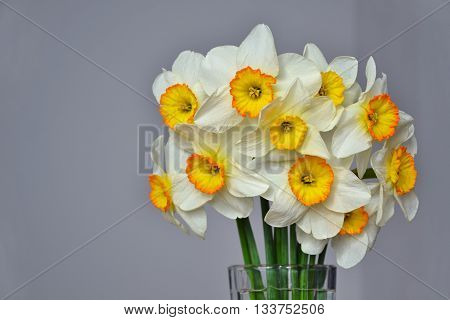 Narcissus Spring Flowers Bouquet White Yellow 2