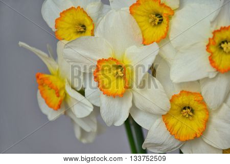 Narcissus Spring Flowers Bouquet White Yellow Closeup 1