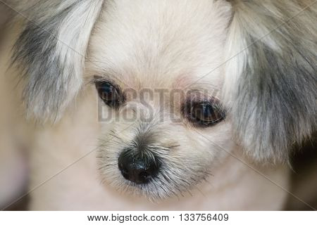 Dog So Cute, Zoom At Face, Beige Color