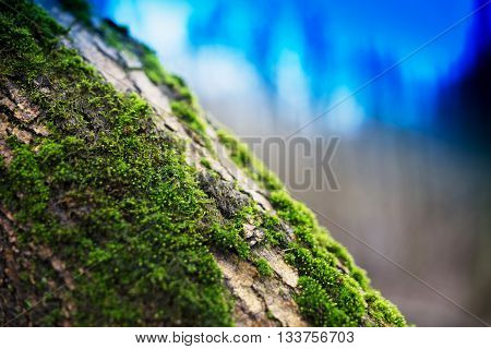 Diagonal moss on tree trunk bokeh background