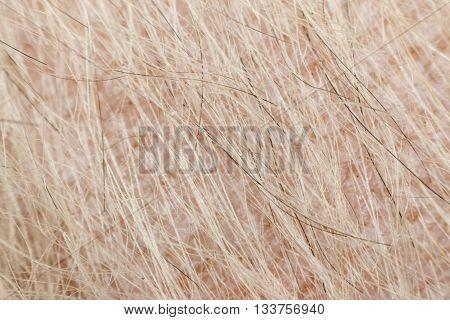 Macro Of Dog Fur And Dermatitis Skin