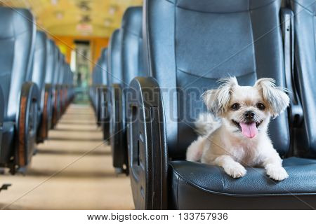 Dog Travel By Train