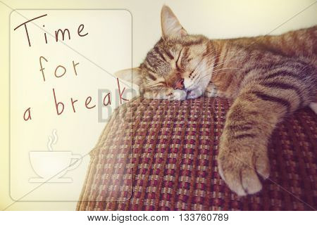 Lazy cat on the couch with word time for a break