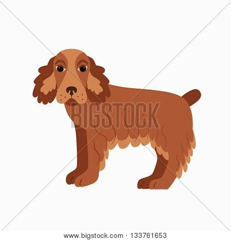 Flat cocker spaniel pet illustration. Standing cute dog vector. Flat dog animal pet vector icon. Home cartoon standing cocker spaniel in flat style. Dog colorful silhouette isolated on white