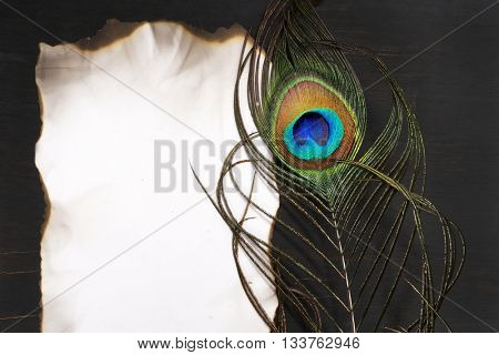 Paper and Peacock feathers. Peacock. India