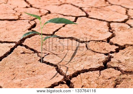Young plant growing on cracked soil business concept of emerging leadership success global warming concept