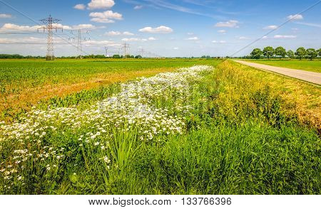 Colorful image of an agricultural area in the Netherlands with a row of pylons in the field. At the field's edge are exuberant flowering wild plants. It's a sunny day with a blue sky in the summer season.