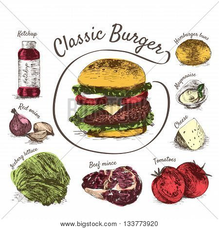 Vector illustration of classic burger ingredients. Hand drawn colorful illustration on white background