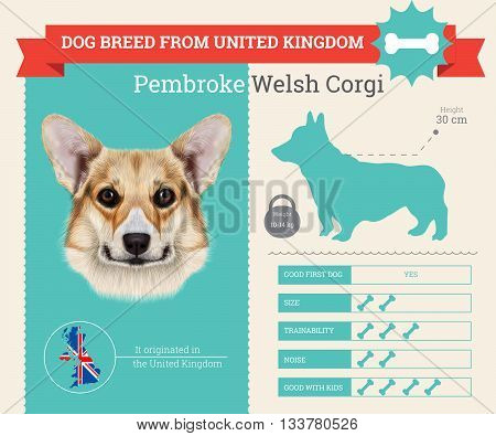 Pembroke Welsh Corgi Dog breed vector infographics. This dog breed from United Kingdom