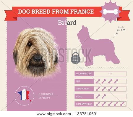 Briard Dog breed vector infographics. This dog breed from France
