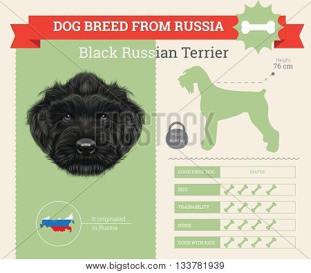 Black Russian Terrier Dog breed vector infographics. This dog breed from Russia