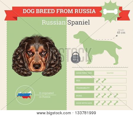 Russian Spaniel Dog breed vector infographics. This dog breed from Russia