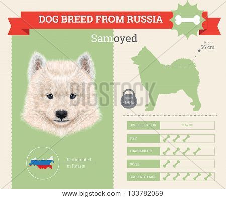 Samoyed Dog breed vector infographics. This dog breed from Russia