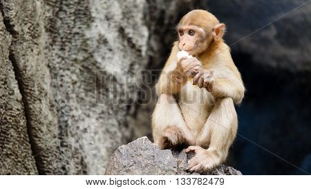 Cute little monkey begging for food from human