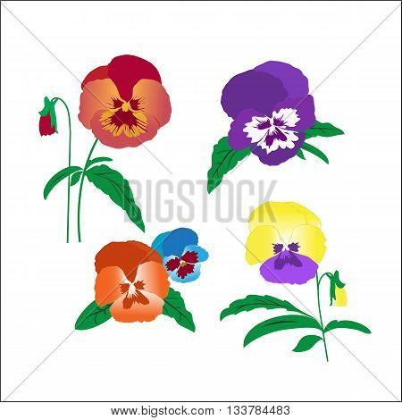 Creative hand-drawn pansies on a white background