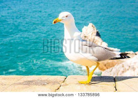 Seagull show itself as a modern fashion model