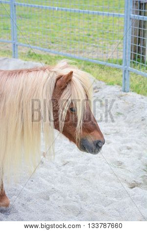 pony in a paddock wait for play