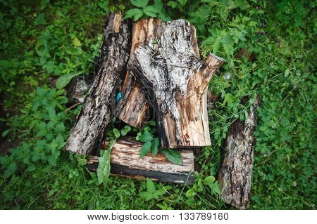The sawn trunk of an aged apple-tree small group of firewood