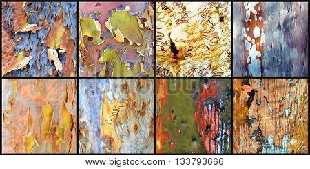 Collage of colourful Australian gumtree (Eucalyptus and Angophora) bark from the Australian bush (black background 4 x 2 panel)