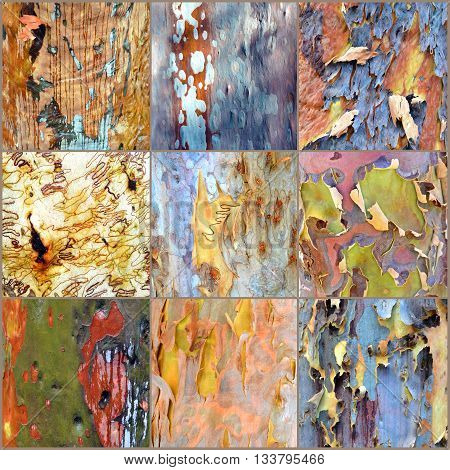 Collage of colourful Australian gumtree (Eucalyptus and Angophora) bark (fawn background, 3 x 3 panel)