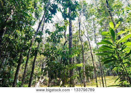 Tropical Rainforest Landscape Background Green Tree