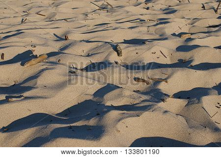 summer beach dune sand with wood debris