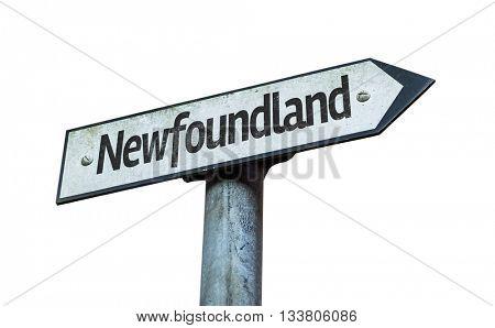 Newfoundland direction sign isolated on white background