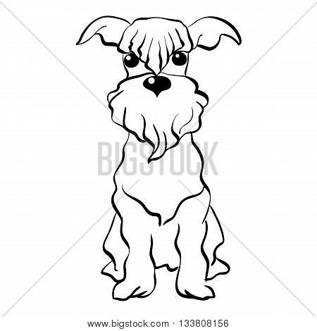 Sketch Funny dog Miniature Schnauzer breed sitting breed hand drawing vector