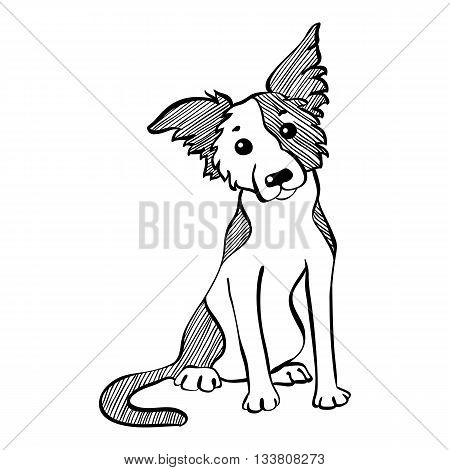 Sketch Funny dog Border Collie breed sitting hand drawing vector