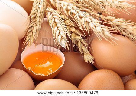 Close up shot of fresh chicken eggs on farmer's market.