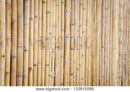 Bamboo Fence Background