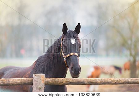 portrait of beautiful horse by the fence