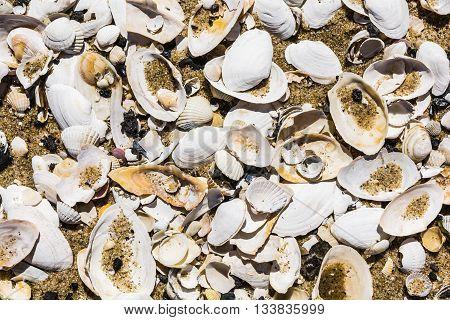 Shells Form A Natural Pattern.
