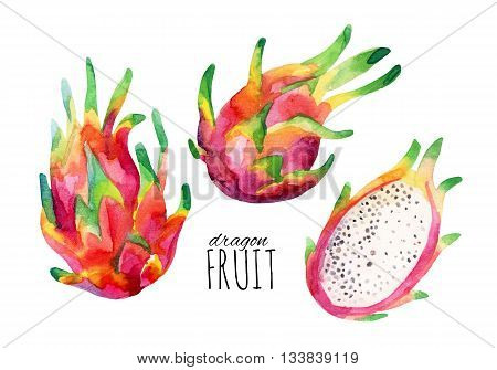 Watercolor dragon fruit set isolated on white background. Watercolor pitaya collection. Hand painted exotic fruit illustration