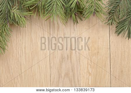 The fir branch on an oak background