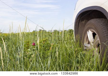 Car wheel at field of green grass with different plants and flowers