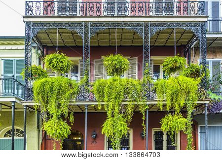 NEW ORLEANS, USA - JUNE 3, 2014: typical iron balcony with green flowers in the old part of New Orleans
