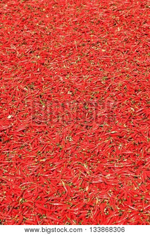 Guntur red chilies are world famous peppers primarily used to make spicy chili powder