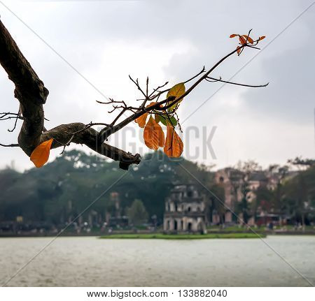 eagle foliage, fall, at Turtle Tower, Hoan Kiem Lake, the center Ha Noi, Vietnam